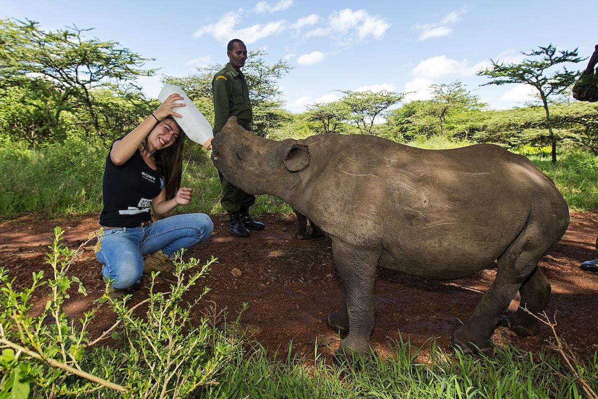 Kenija - beba nosorog